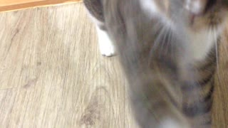 cat is playing with string