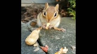 cute squirrel eats nuts