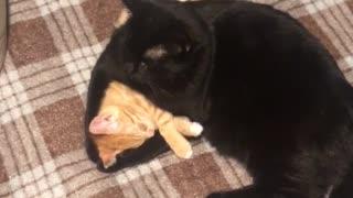 Cute Kitties Cuddle at Bedtime