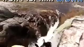 Best Dog saves another dogs life