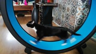 Cat Runs Like Crazy