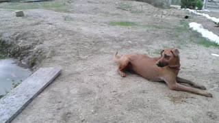 Life Guard Dog on Duty