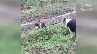 Watch these funny cats and dogs - absolutely adorable!