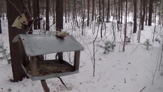 Winter Walk Through The Forest