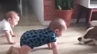 dog playing with children bebiy