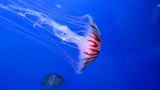Ocean Animal Nice video