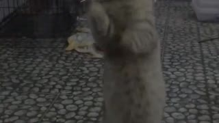 Cat wiping glass window
