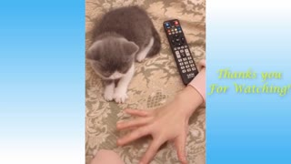 Cute Pets And Funny Animals Compilation try not to laugh