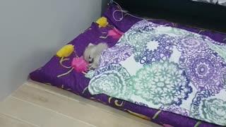 Tiny Dog, Big Bed