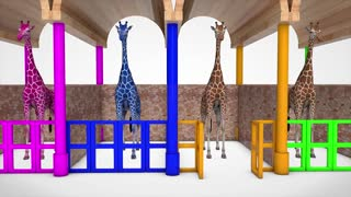 Learn colors and numbers with giraffes in English