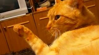 Кот ге понимает что происходит