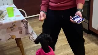 Doggy Dances Along With Its Person