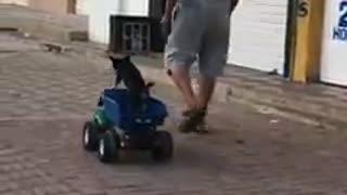 Graban a un hombre que tiraba misteriosamente de un camión de juguete con un pequeño perrito (2)