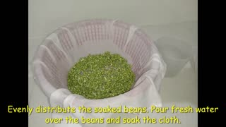 How to Sprout beans EASY 1 minute video