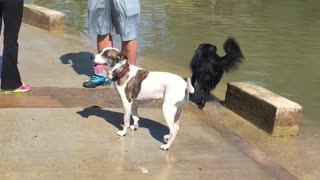 Dog afraid of water?