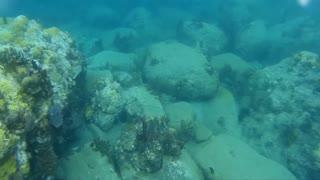 St. Kitts 2016 Snorkeling