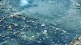 jellyfish/ ocean