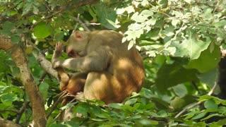 Monkey funny family care