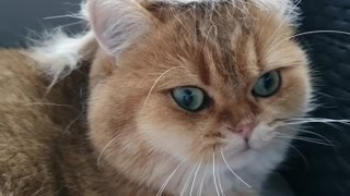 Funny cat shows off fancy new hairstyle