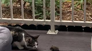 Cat Makes Friends with Mouse