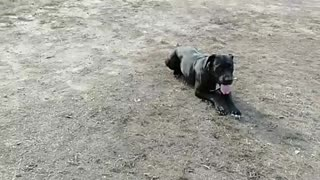 Watch What This Pup Does When She Refuses To Leave The Dog Park