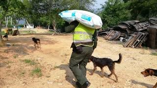 En la tierra, los perros sin hogar fueron también beneficiados con la labor de los uniformados.