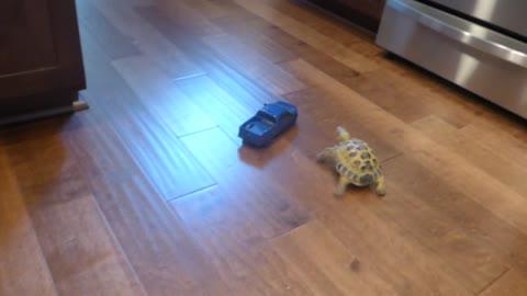 Tortoise vs Truck