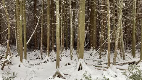 Mirkwood in the snow?