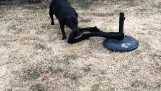 Dog Finds Fun By Itself