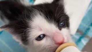 Lovely Baby Cat