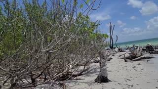 Relaxing Beach Walk Secluded Island - Florida
