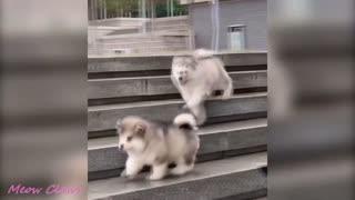 CUTE DOGS HAVING FUN!