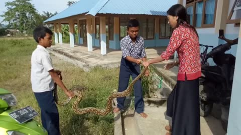 A Woman Bravely Handle a Python