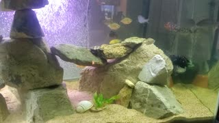 Male and Female Jack Dempsey