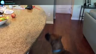 dog crazy about apple
