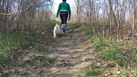 Adorable Dog Walker Elena Takes Care of Twins Dogs Today