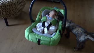 Cats Meeting Babies for the first time (CUTE)