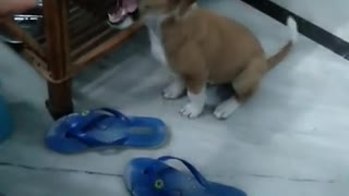 funny puppy love compilation