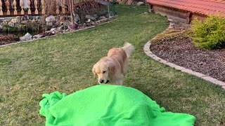 Dog Confused by Disappearing Owner