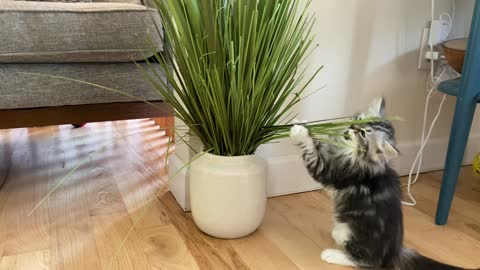 Kitten playing with fake plant