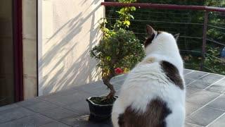 Mother Cat Pet Wait Near Tree