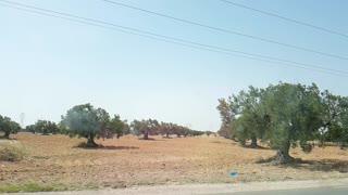 Natural view land
