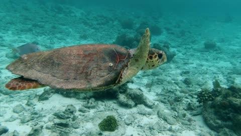 turtle ocean sea