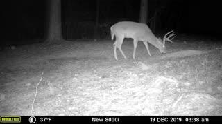 Georgia Big Buck