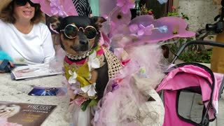 Glamorous dog shows off costume at pet parade