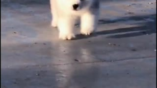 Cute little dogs play and have fun