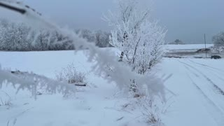 Cool Frozen frost falling from small tree