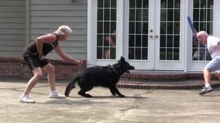 Guard Dog Training video