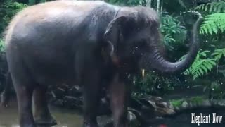 An Elephant put water on it from the lake.