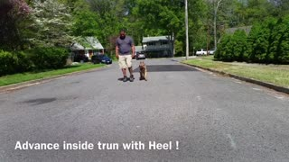Try training your dog this way.